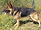 Cachorros de Rex_1