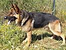 Rex y sus cachorros_4